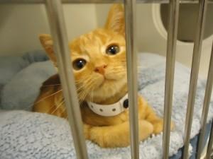 Sugery kitten