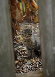 Feral Cat Trap Neuter Return