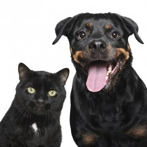 Black dog and cat