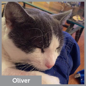 Angel Fund Oliver