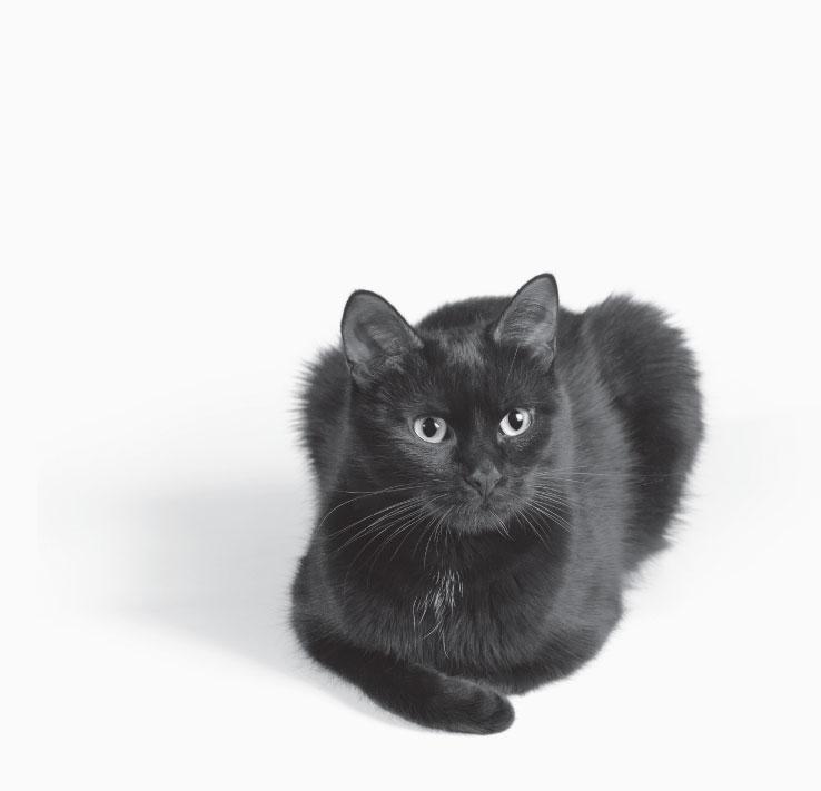 fcnmhp-cat-2