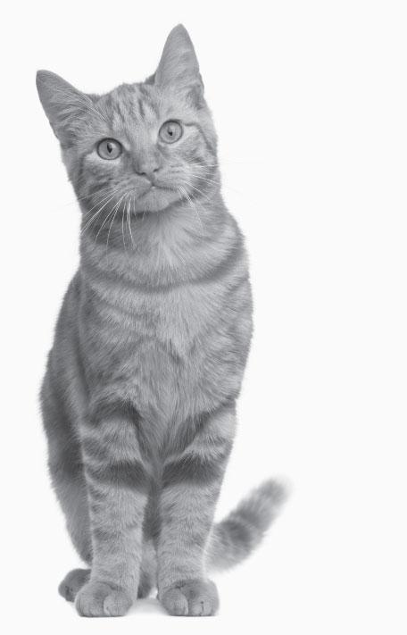 fcnmhp-cat-3