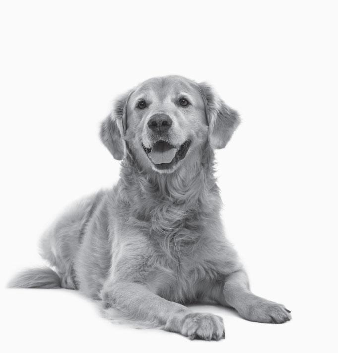 fcnmhp-dog-1