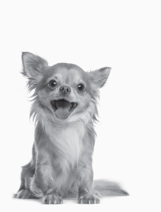 fcnmhp-dog-2