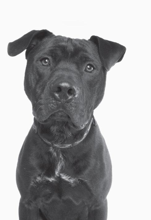 fcnmhp-dog-3