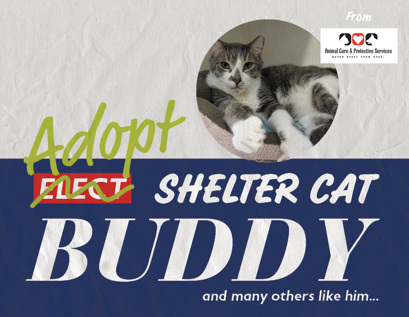 Buddy from Animal Care and Protective Services