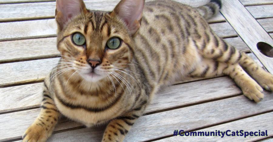 community-cat-special