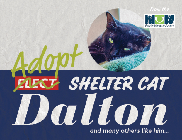 Dalton from the Flagler Humane Society