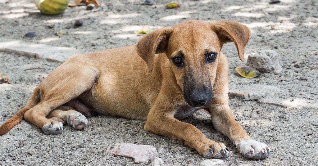 Hurricane Irma Homeless Dog