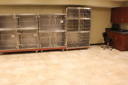 First Coast No More Homeless Pets Cassat