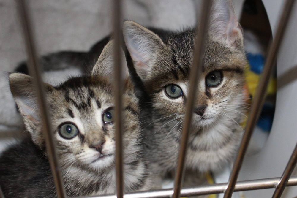 Kittens in the Clinic