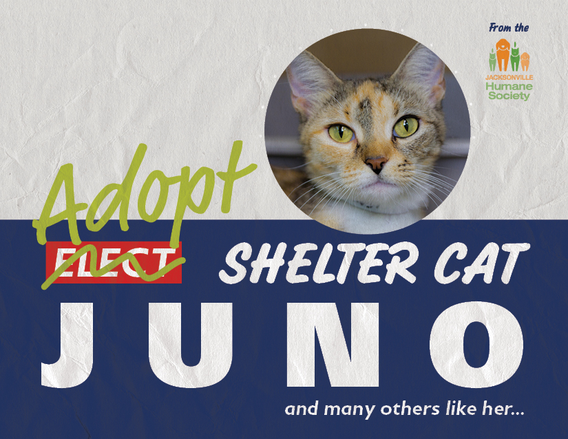 Juno from the Jacksonville Humane Society