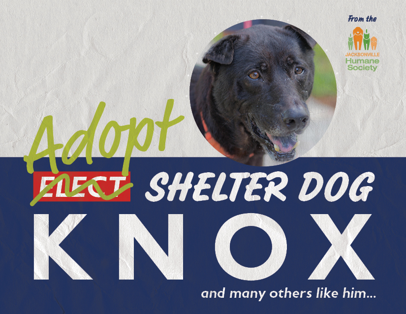 Knox from the Jacksonville Humane Society