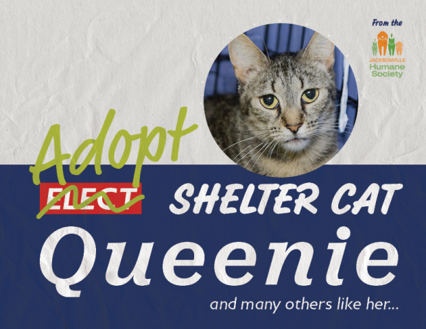 Queenie from the Jacksonville Humane Society