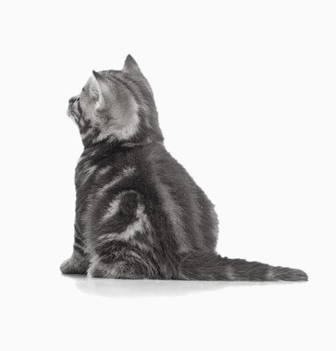 curious-cat