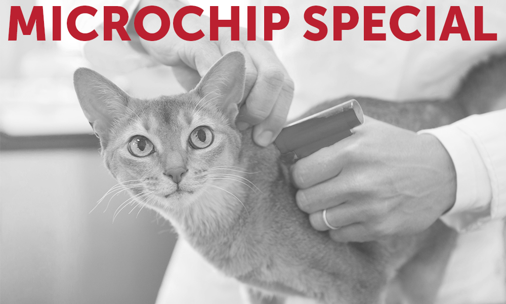 Microchip Special - First Coast No More Homeless Pets