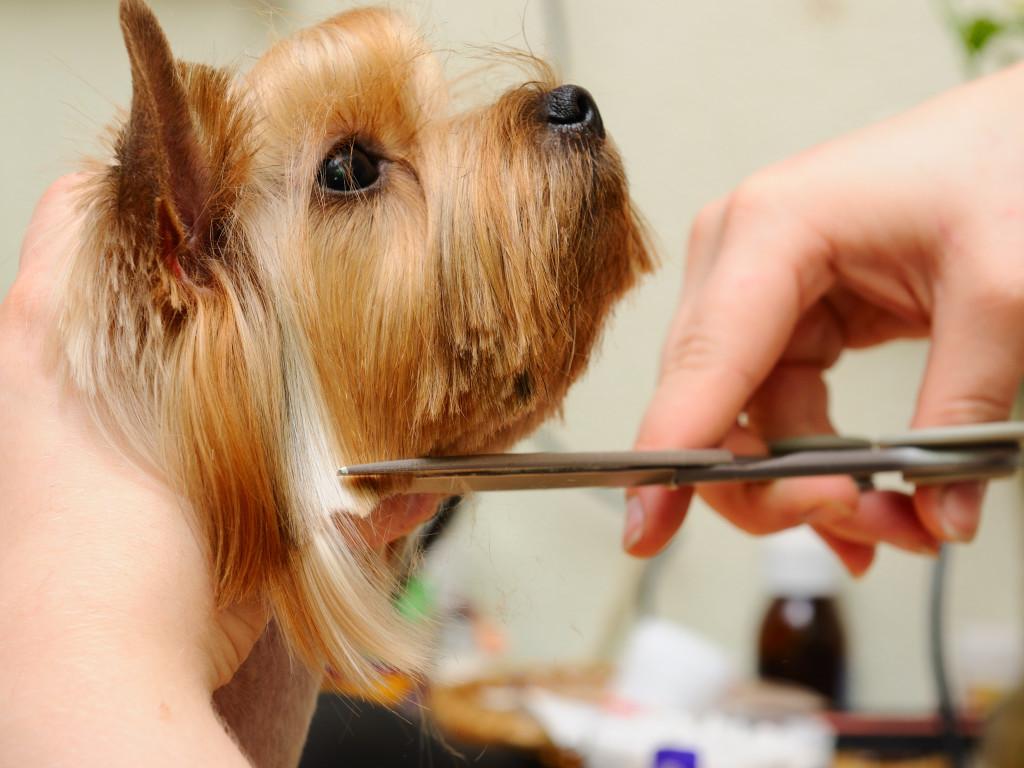 Jacksonville Pet Grooming