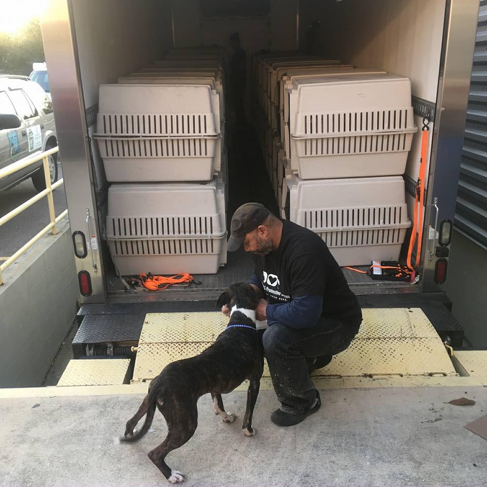 ACPS Dog Loaded