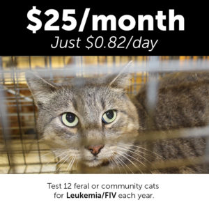 Monthly Giving Animal Welfare