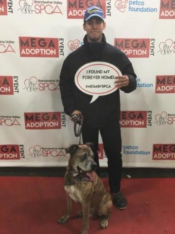 Pet Adoption Jacksonville Philadelphia