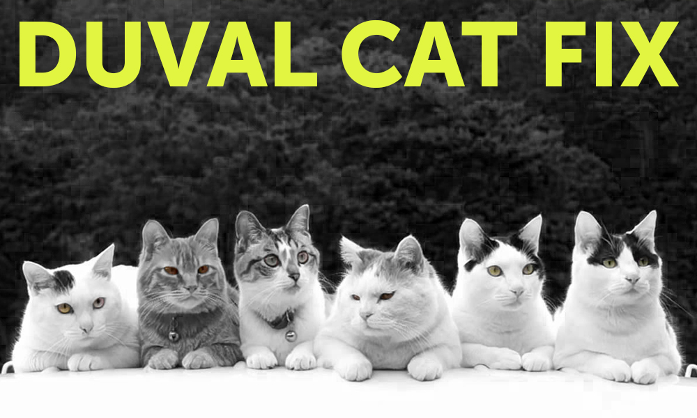 Duval Cat Fix