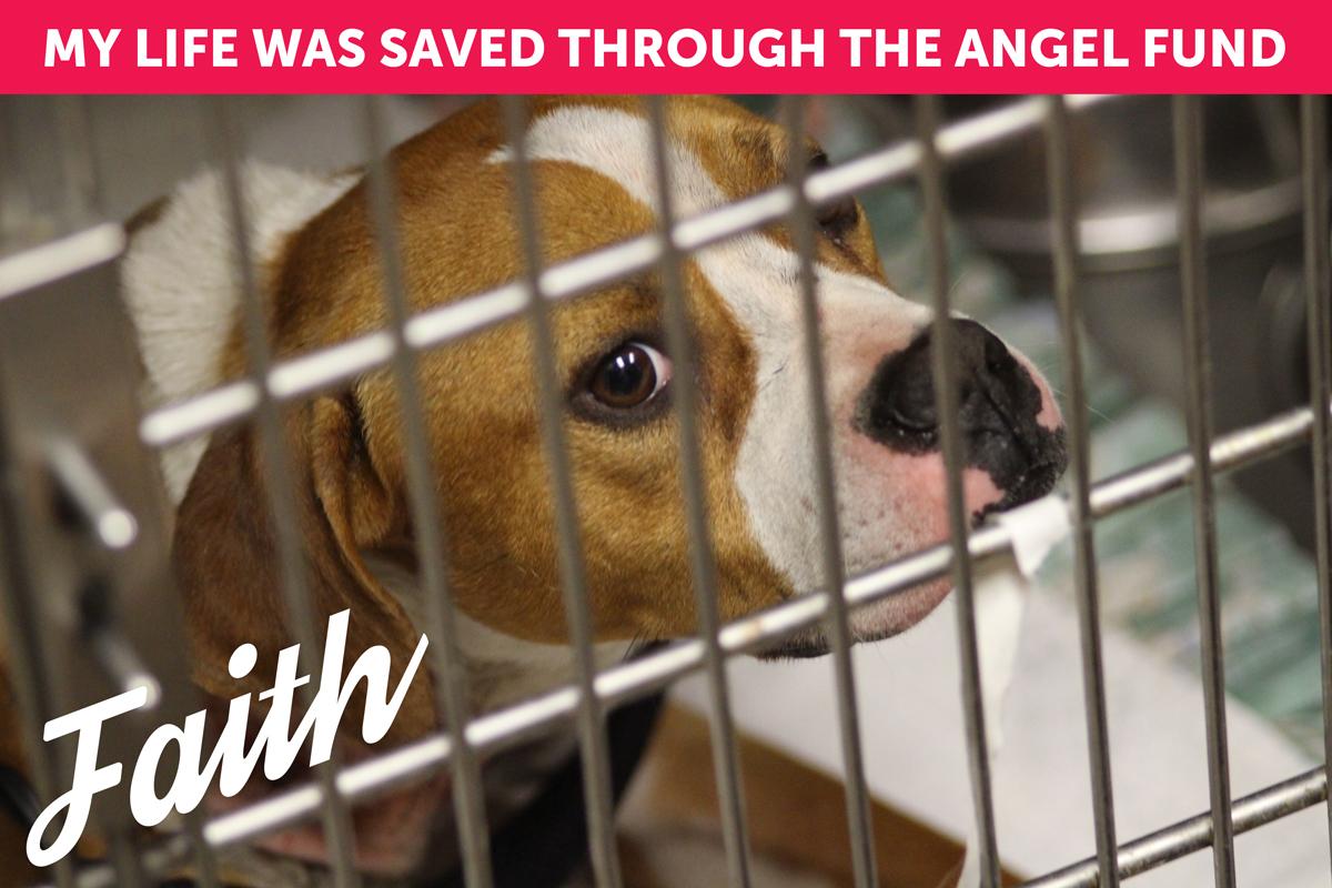 Angel Fund Faith