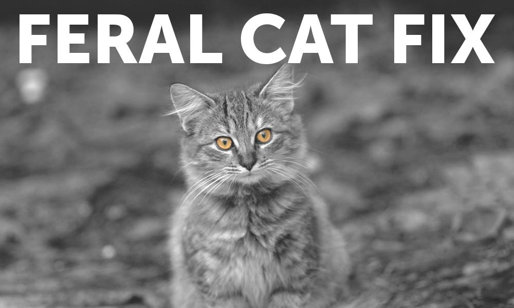 Feral Cat Fix