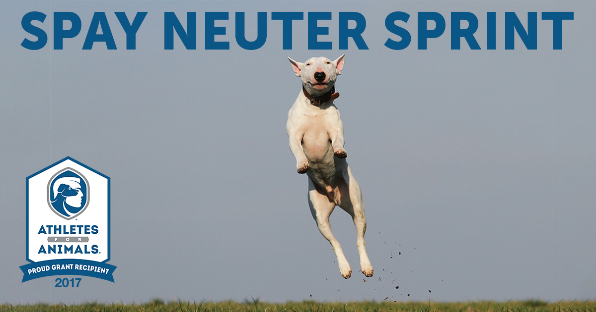 Athletes for Animals Spay Neuter Sprint