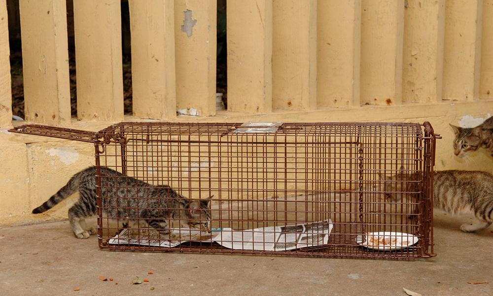 Feral Cat Spay Neuter