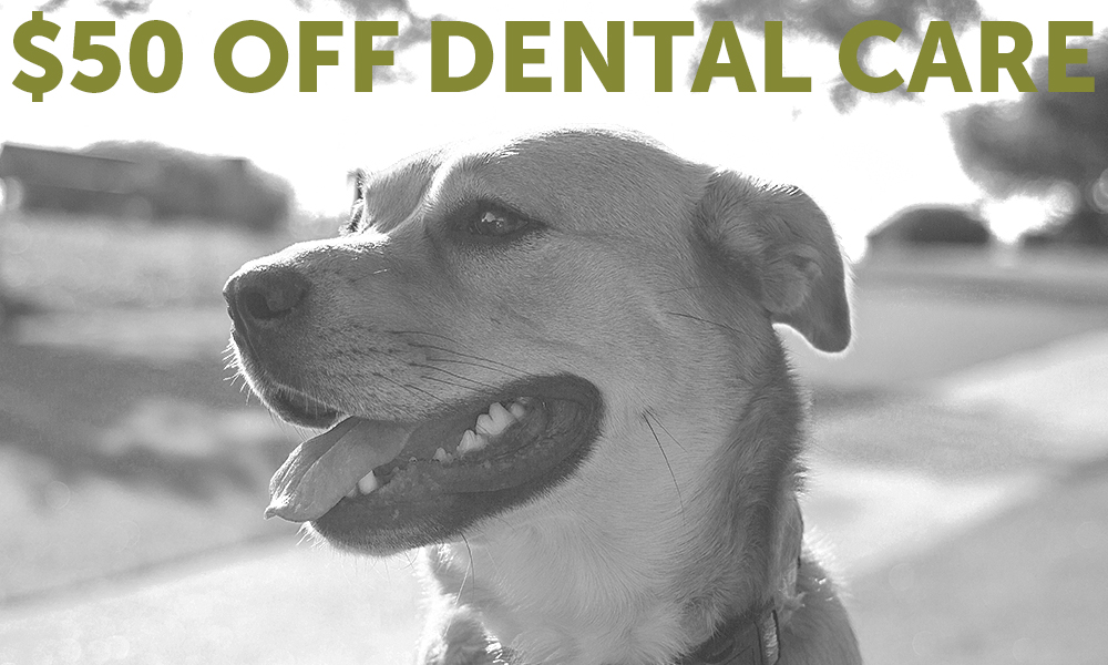 Free, Discounted, and Low Cost Veterinary Services - First